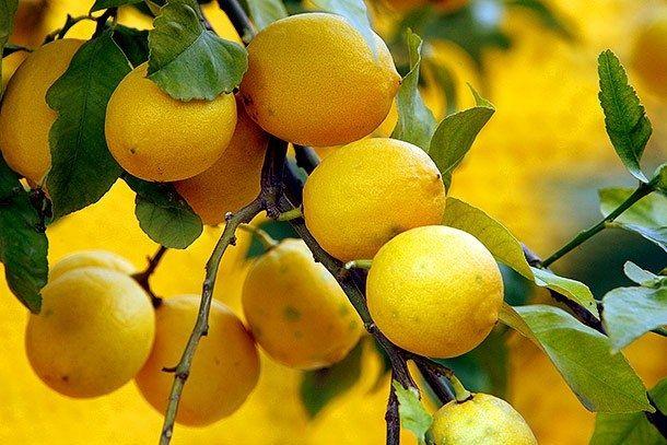 Лимонная тряпка против пыли