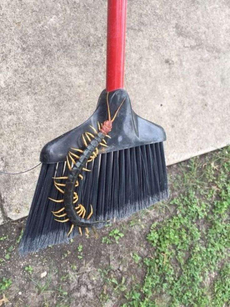 "On July 1, the Garner State Park Facebook page posted this photo of a large redheaded centipede.  Bites from the terrifying ""creepy-crawly"" are often mild, resulting in a sting comparable to a bee and usually accompanied by swelling."