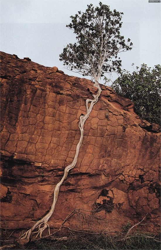 Amazing Tree. Incroyable la force de la nature.