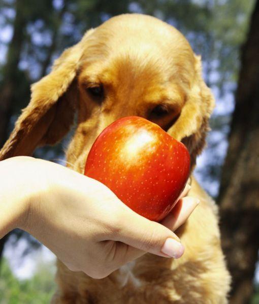 Is Dog Hair A Good Fertilizer