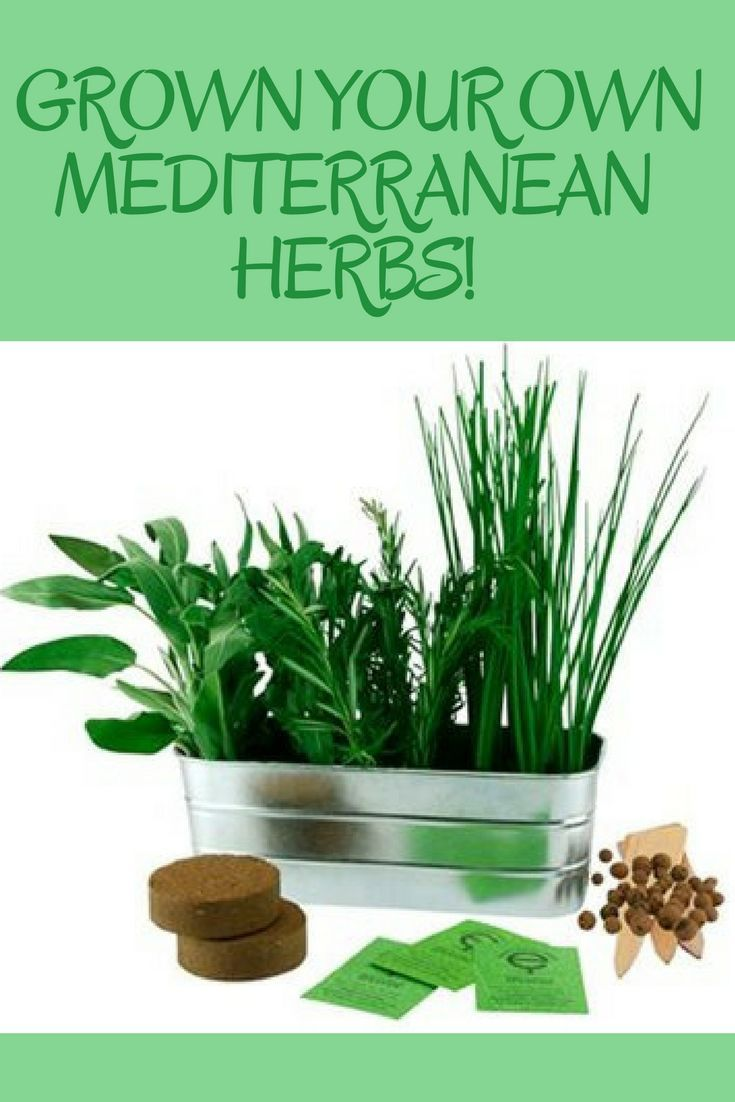 Mediterranen Herb Garden Add A Gourmet Touch To Any Meal With