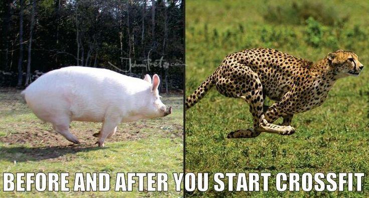 https://es.johnnybet.com/juegos-de-casino-gratis-tragamonedas-cleopatra#picture?id=7762 #animals #crossfit #funnyanimals #lol #followus