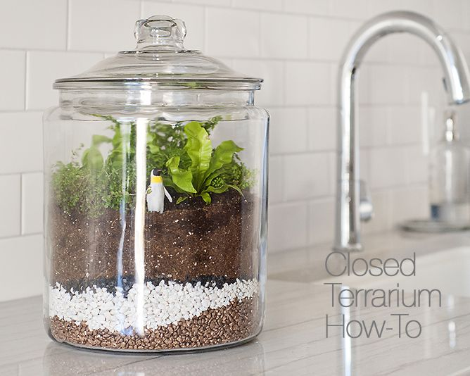How to Make a Closed Terrarium | Crate and Barrel Blog