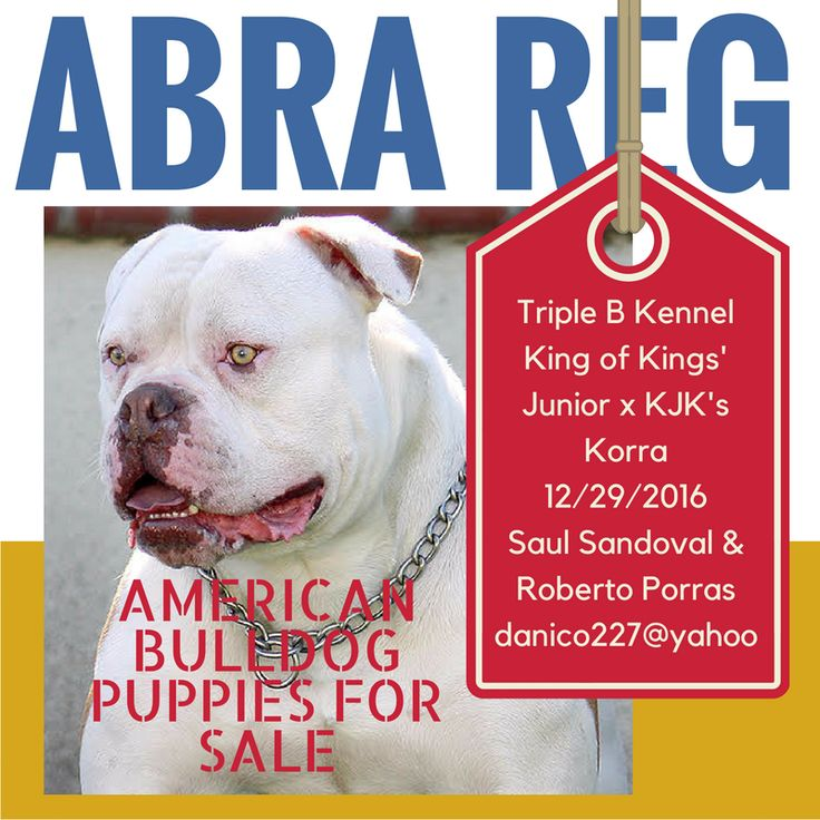 ABRA Registered American Bulldog Puppies For Sale