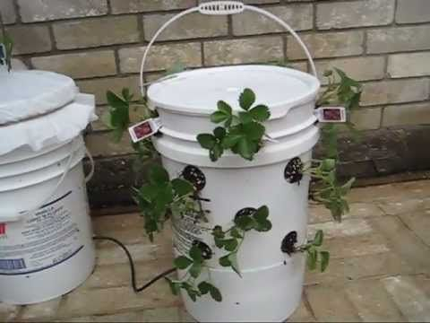 Off-Grid Self-Watering Container Garden System | Urban Survival Site