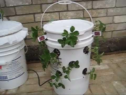 17 best images about 5 gallon bucket on pinterest bucket - Self watering 5 gallon bucket garden ...
