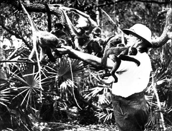 Monkeys at McKee Jungle Gardens (ca. 1950). | Florida Memory