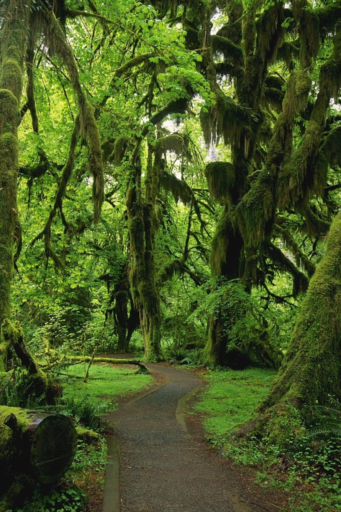 Place #6 — Hoh Rainforest, Olympic National Park, Washington. Click to discover what makes this one of our favorite 50 places, and #SeeForYourself.