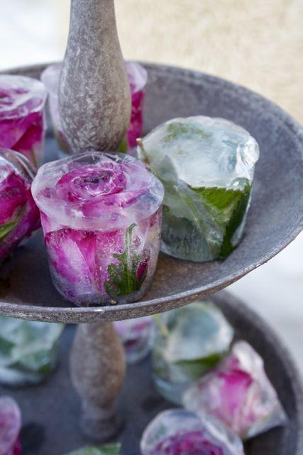 fleurs d'hiver. rien kewler! – jardin – #blooms #garden #Kewler #Hiver   – Entertainment
