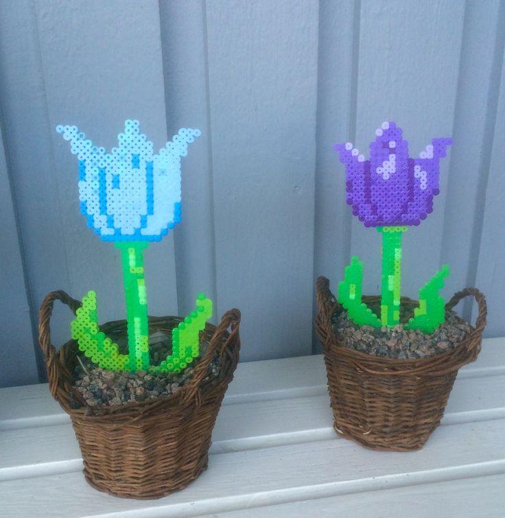 Tulip flowers Hama/Nabbi beads by Sara G-son