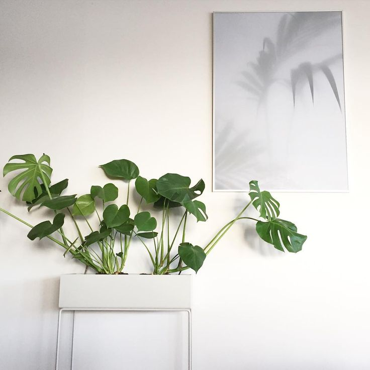 18 best Ferm living images on Pinterest Plant box Plants and
