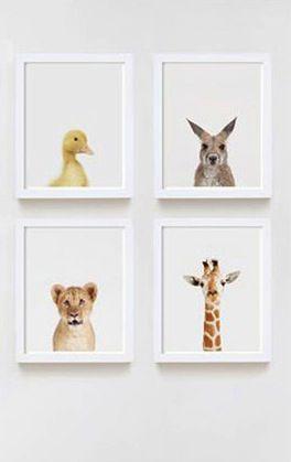 The Animal Print Shop   Little Gatherer