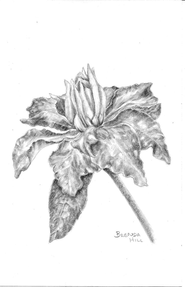Clematis graphite floral by Brenda Hill