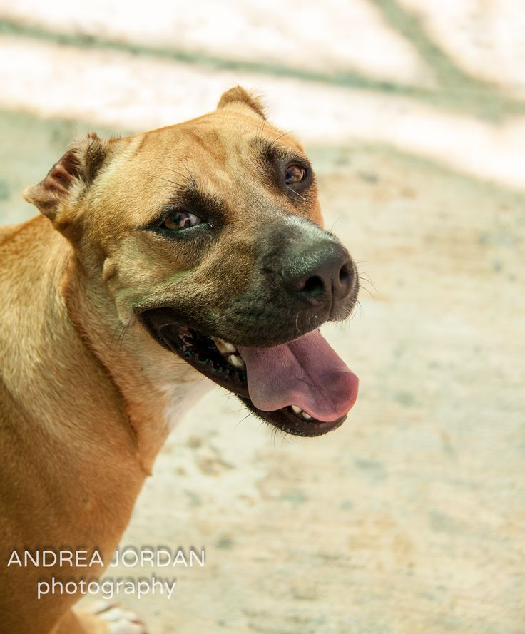 My Time As A Volunteer At Playa Animal Rescue (Mexico)