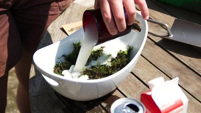 Met mos, melk en bier maakt u zo een speciale mosverf voor op de muur