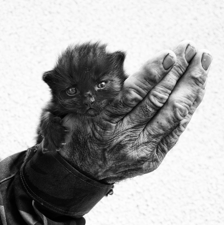A Handful of Happiness  (First steps) by Silvia S., via 500pxPhotographers, Cat, Hands, Blancoynegro, Happy, Black White, Dogs Lovers, Photography, Animal