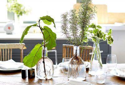 cultivando-plantas-en-agua-01