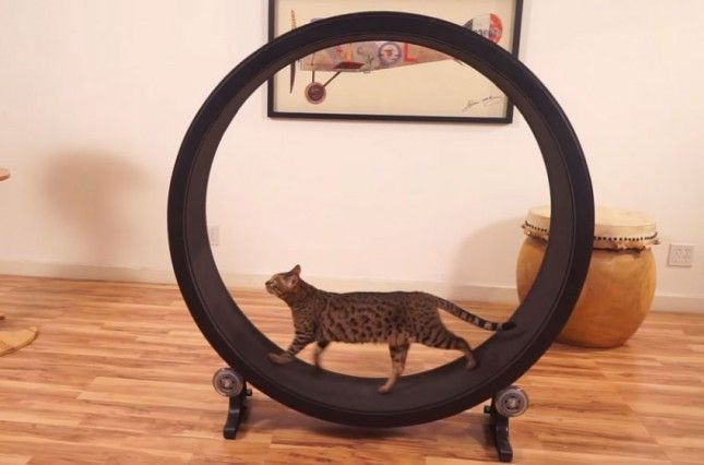 This Cat Exercise Wheel Just Raised Over $285,000 via Brit + Co.