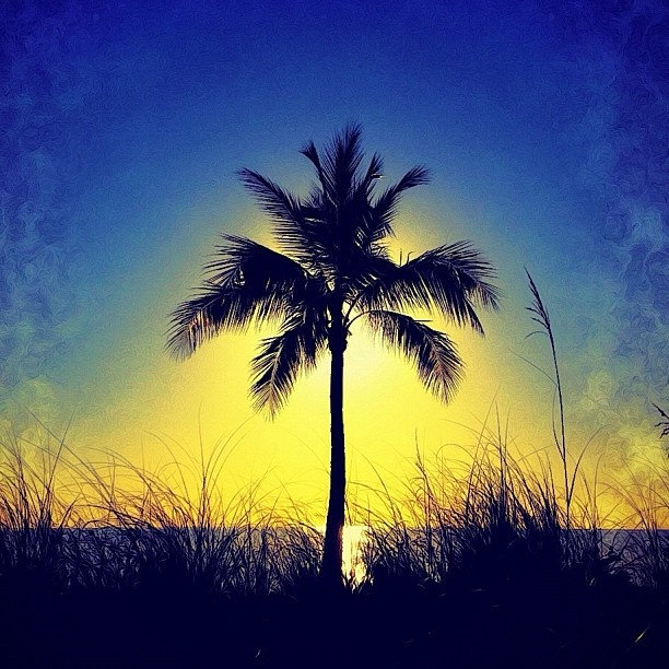 Dune palm impression: Favorite Places, Palms Trees, Dune Palms, Life Mi Happy, Beaches Vacations, Palms Impressions, Beaches Life Mi