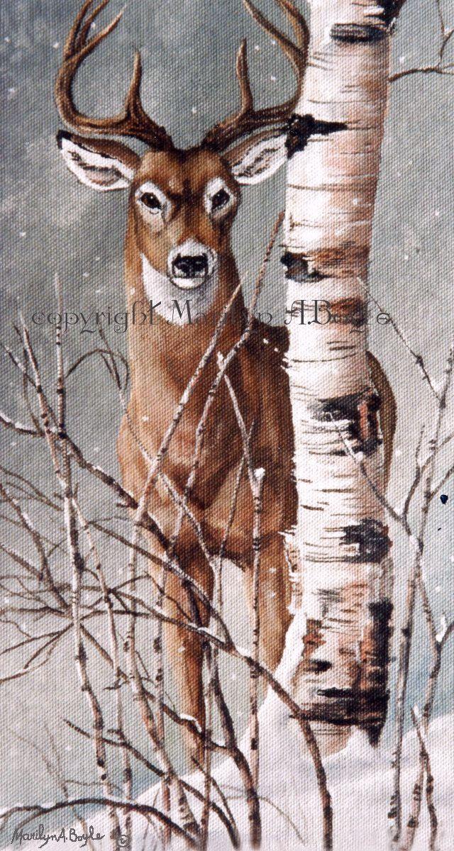 WILDLIFE PRINT- DEER; white tail deer, winter, bir…