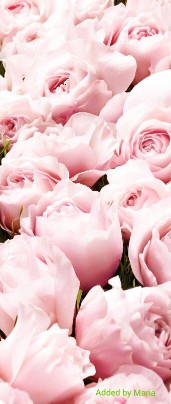 Pretty pink flowers via @jinab. #flowers #pink