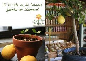 Los limoneros florecen al aire libre durante todo el año en regiones cálidas y soleadas, pero también pueden crecer y dar fruto en si se cultivan como plantas de interior. Si la vida te da limones… ¡cultiva un limonero! Guía paso a paso para cultivar un limonero a partir de semillas: Cosas que necesitarás: 1. Un limón. Asegúrate de que sea orgánico, las semillas de los limones no orgánicos suelen ser incapaces de germinar. 2. Tierra para macetas. Las que tienen mezcla de turba, perlita, ...