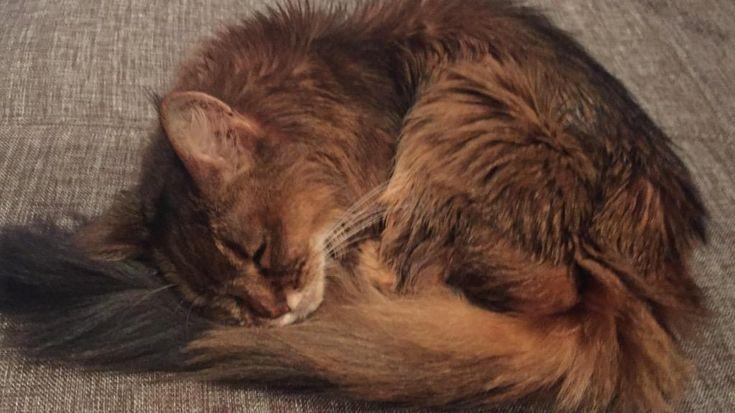 トラがときどき寝言いうんよ。 猫も夢を見るんだね〜(๑´ڡ`๑)