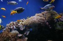 Εικόνες εικόνα φόντου - κατεβάσετε δωρεάν τροπικά ψάρια αλμυρού νερού ενυδρείο fishtank που υδρόβια υποβρύχια HD εικόνα εικόνες & φόντου, επιφάνειας εργασίας 10 14 5 2013 00 41