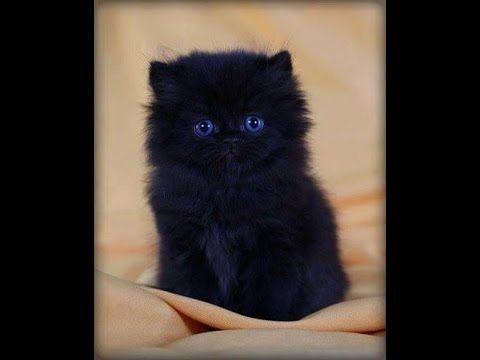 Best TOP 10 Little Cute Kitties - Cute Kittens: Video Cute Cats Compilation MORE VIDEOS HERE https://www.youtube.com/watch?v=InDJc2L_5dA&list=PLC_HjotBFMpNqd0u6cYK0NtHBXcOIEEoD   SUBSCRIBE: http://www.youtube.com/user/TheFederic777?sub_confirmation=1   #Kittens #Cats #CuteKittens