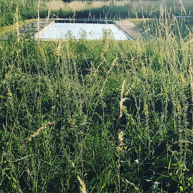 #lepavillondelorangerie #jardindesauvages