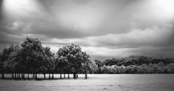 Black and White Trees Landscape Photography by CandyMountainPhotos, €19.00