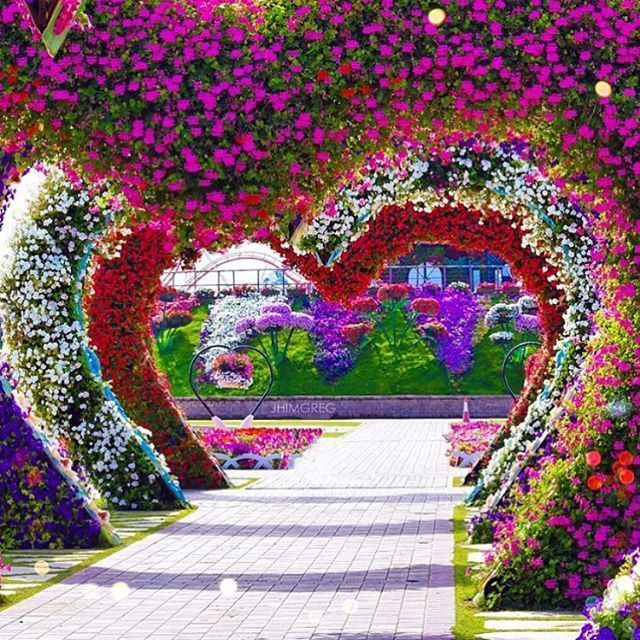 ✿⊱❥ Dubai Miracle Garden Dubai UAE I wish I go there I will forget all my sorrows ..❤️✈️