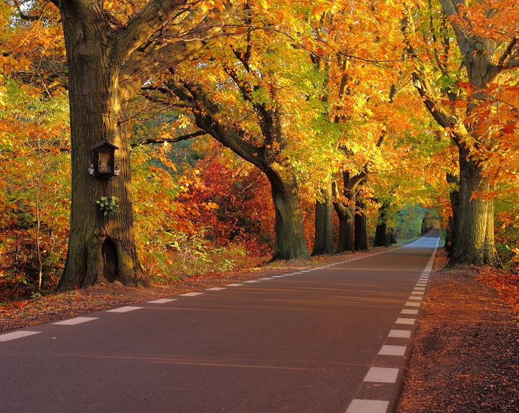 https://flic.kr/p/kosUzM | Autumn road