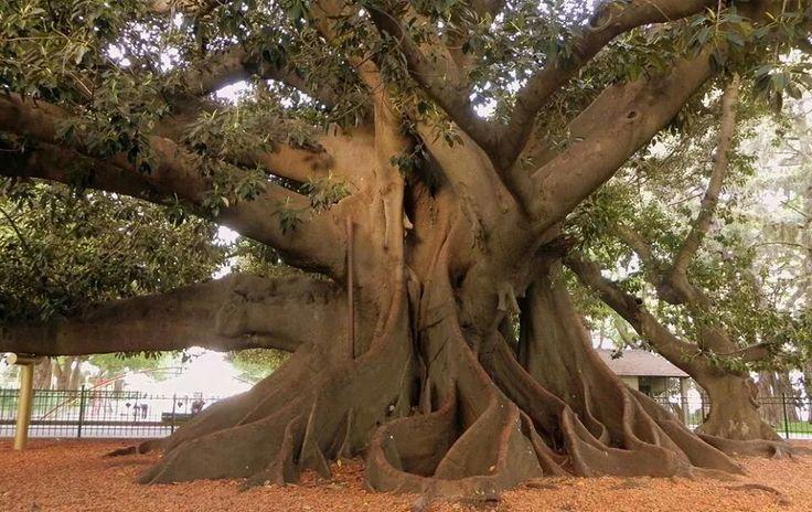 Tronco di albero