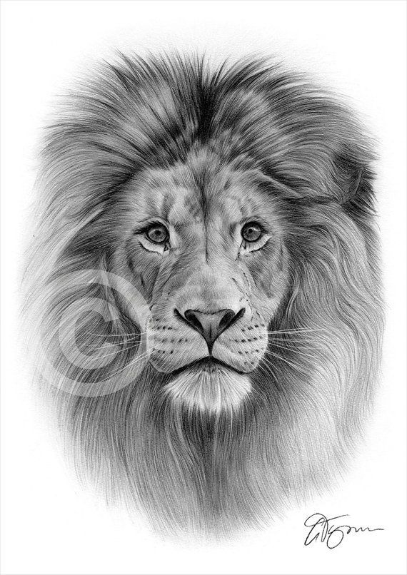Pencil drawing graphic print of a lion by UK artist Gary Tymon. Ori