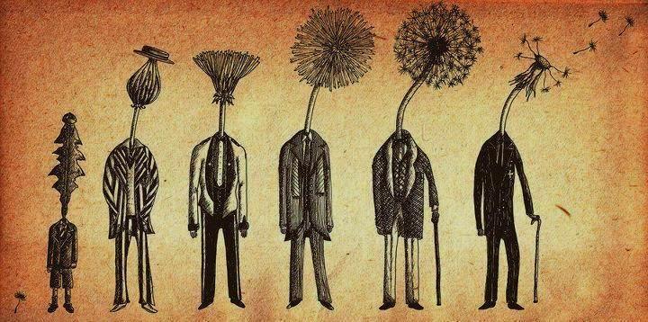 The Seven Ages of Mandelion by Jon TurnerLife, Inspiration, Jon Turner, Age, Illustration, Artsy Fartsy, Dandelions, Flower, Mandelion