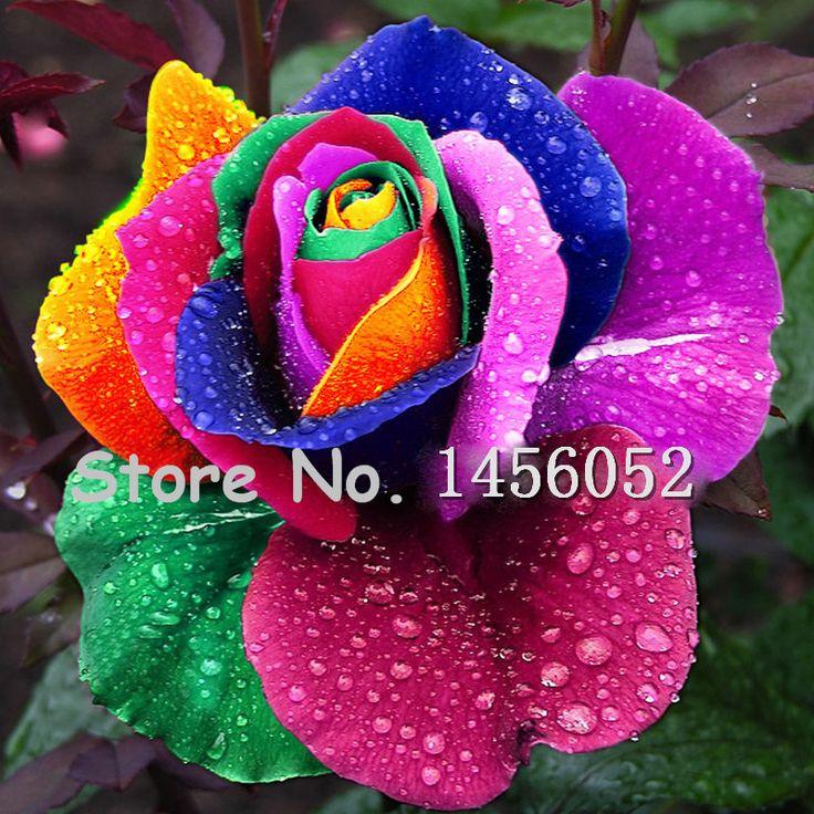 3.29 On Sale!!! 10 pcs Seeds Rare Holland Rainbow Rose Flower Home Garden Rare Flower Seeds Colorful Rose Seeds