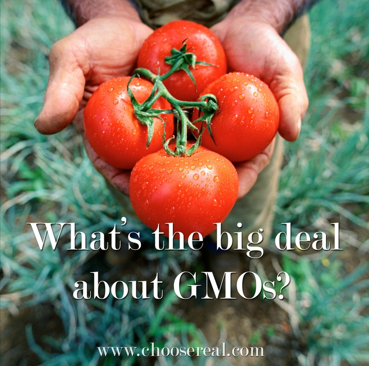 What does GMO mean and what is all the controversy about?