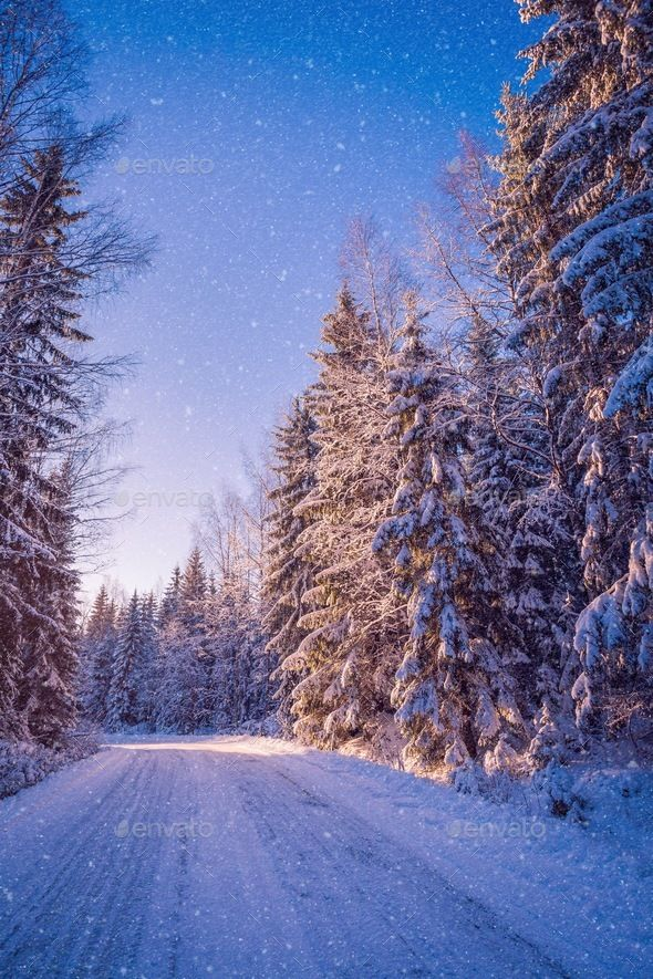 Beautiful Winter Landscape Snowy Forest On Sunny Day Winter Landscape Winter Scenery Snowy Pictures