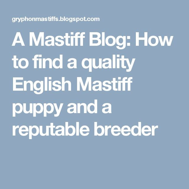 A Mastiff Blog: How to find a quality English Mastiff puppy and a reputable breeder