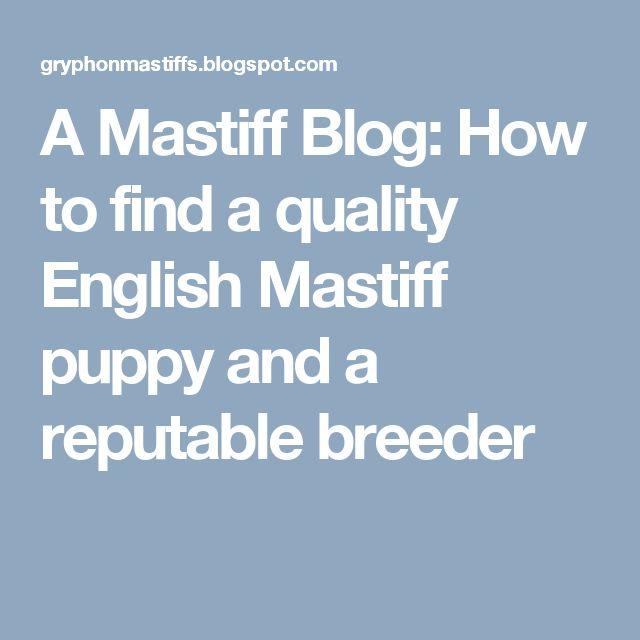 A Mastiff Blog: How to find a quality English Mastiff puppy and a reputable breeder