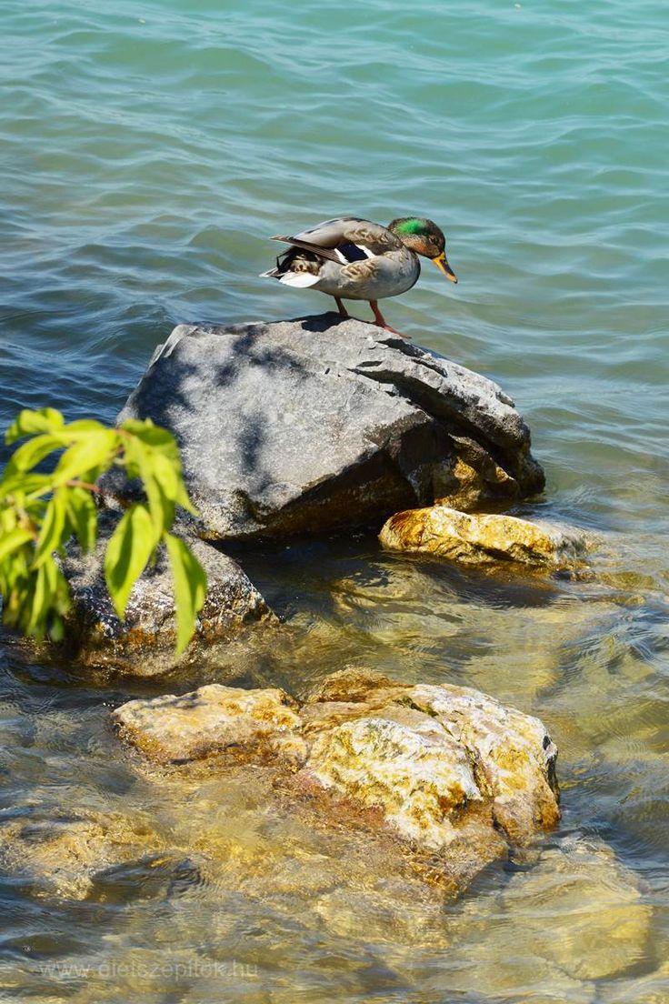 Indul a balatoni nyár! Pillanatok, hangulatok Tihanyról, Füredről   Életszépítők
