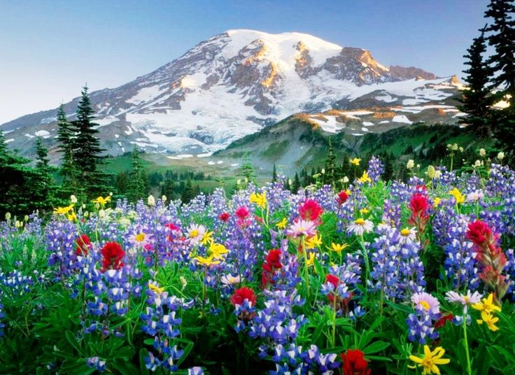 Paisajes de flores para fondos de pantallas fotos - Fotos de flores bonitas ...