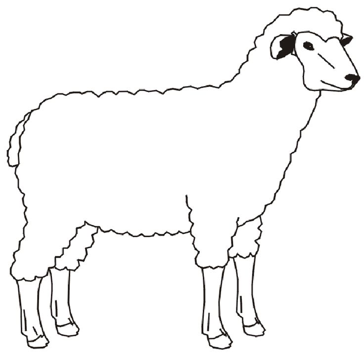 Out Line Drawing Of Animals : Best images about animal drawings on pinterest