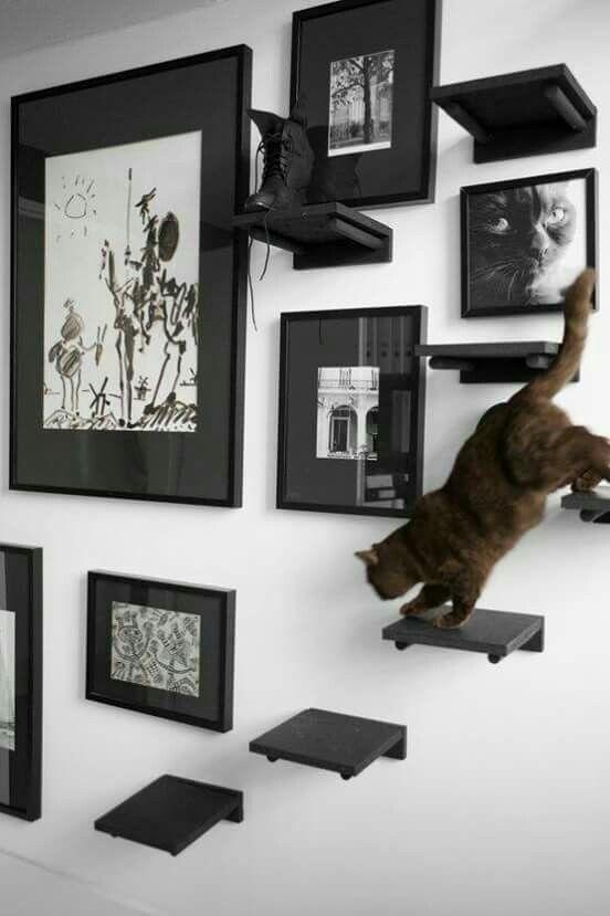 Gatos en casa ✨🐱