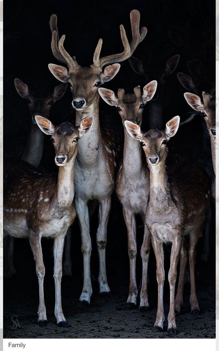 Louisiana Deer Map%0A Una de las glorias de la civilizaci  n ser  a el haber mejorado