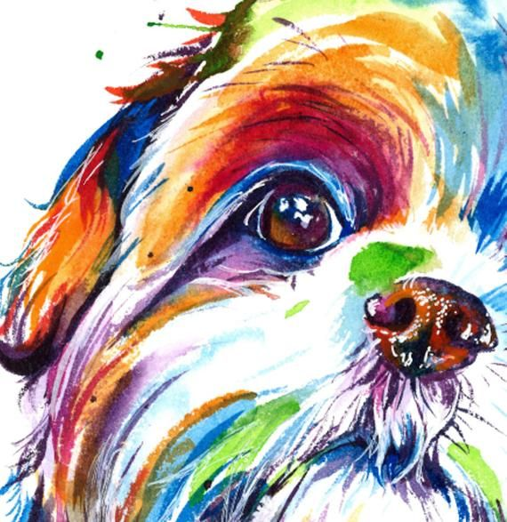 Reproduction D Aquarelle Coloree Shih Tzu Impression D Art De Ma