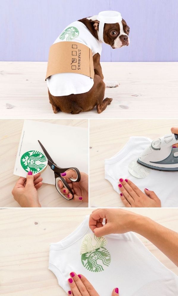 DIY How to dress your dog as a Latte for Halloween.
