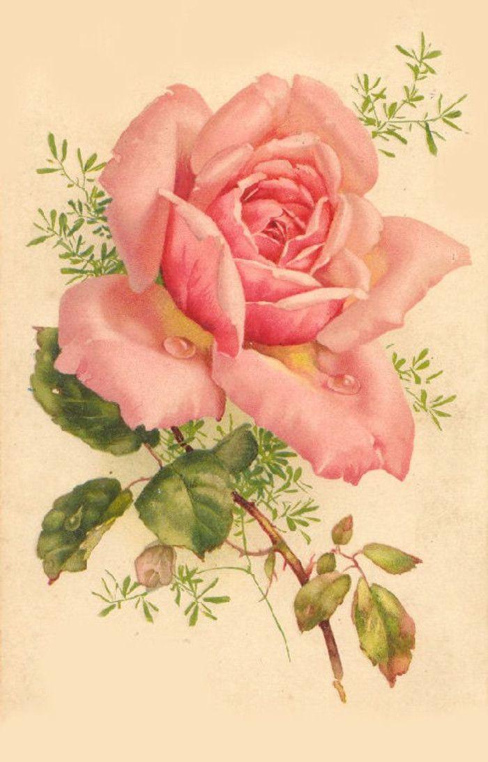 Рисунок розы на открытках, прикольные картинки