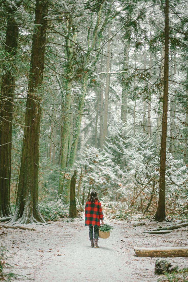 winter walk in the forest
